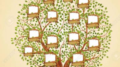 Photo of معرفة شجرة العائلة بالرقم القومى فى مصر