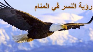 Photo of رؤية النسر في المنام