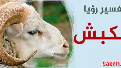 Photo of الكبش في المنام