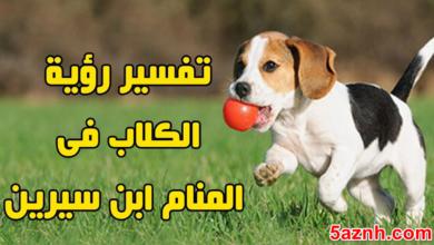 Photo of الكلب في المنام