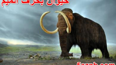 Photo of حيوان بحرف الميم