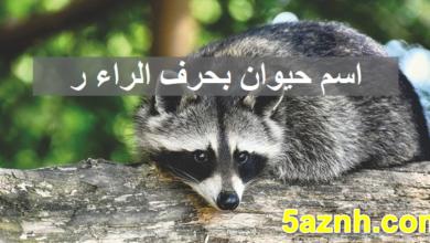 Photo of حيوان بحرف الراء