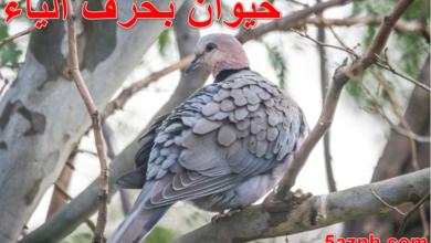 Photo of حيوان بحرف الياء