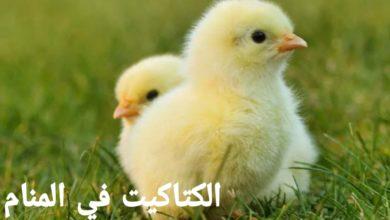 Photo of الكتاكيت في المنام