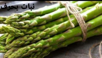 Photo of نبات بحرف الهاء