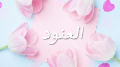 Photo of معنى اسم العنود