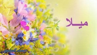 Photo of معنى اسم ميلا