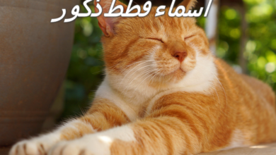 Photo of اسماء قطط ذكور