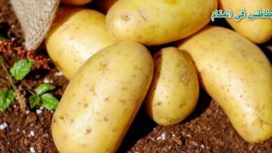 Photo of البطاطس في المنام